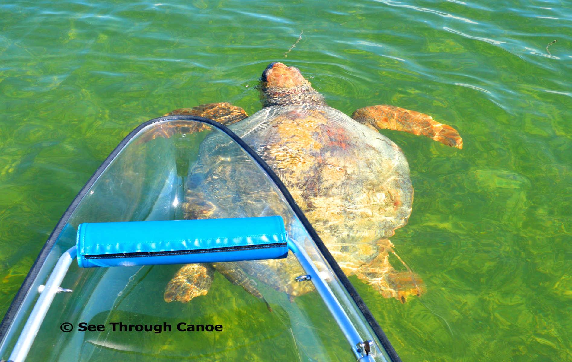 Large sea turtle under the clear kayak hybrid