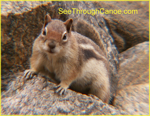 picture of a ground squirrel