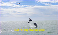 Photo of two dolpin jumping out of the water near Johns Pass in Treasure Island